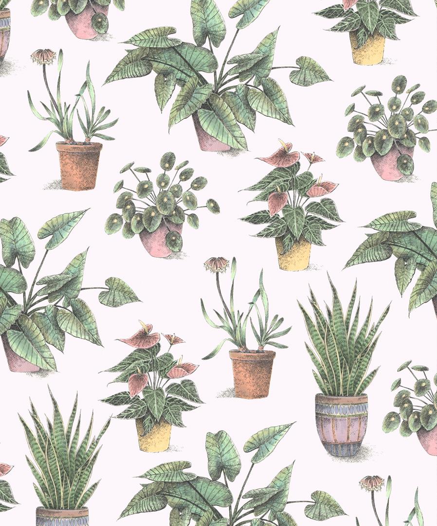 Allira_House-Plants