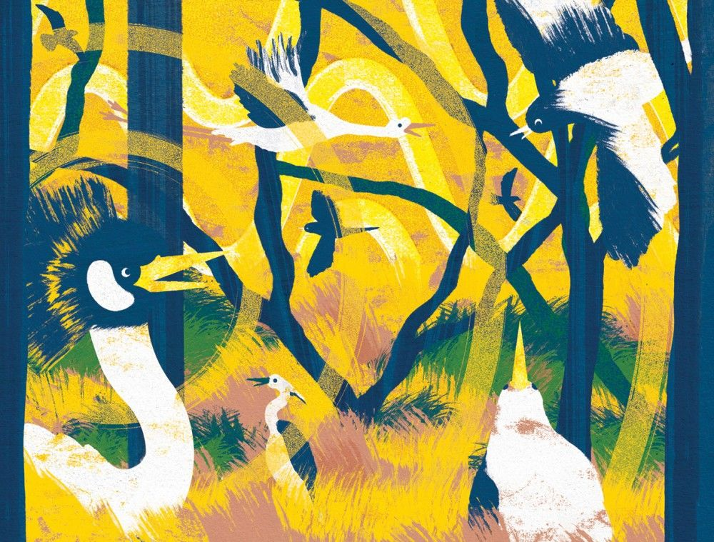 Daniel-Clarke-Loop-children-magazine-camping-in-Mozambiques-woodlands
