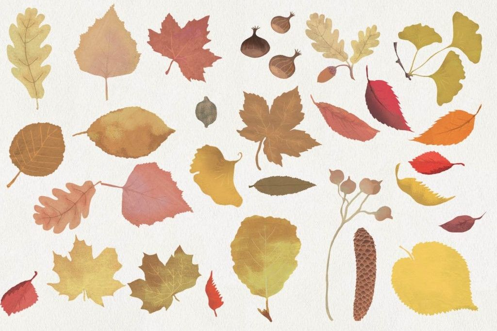 Tinou-Le-Joly-Sénoville-Illustration-Autumn-leaves