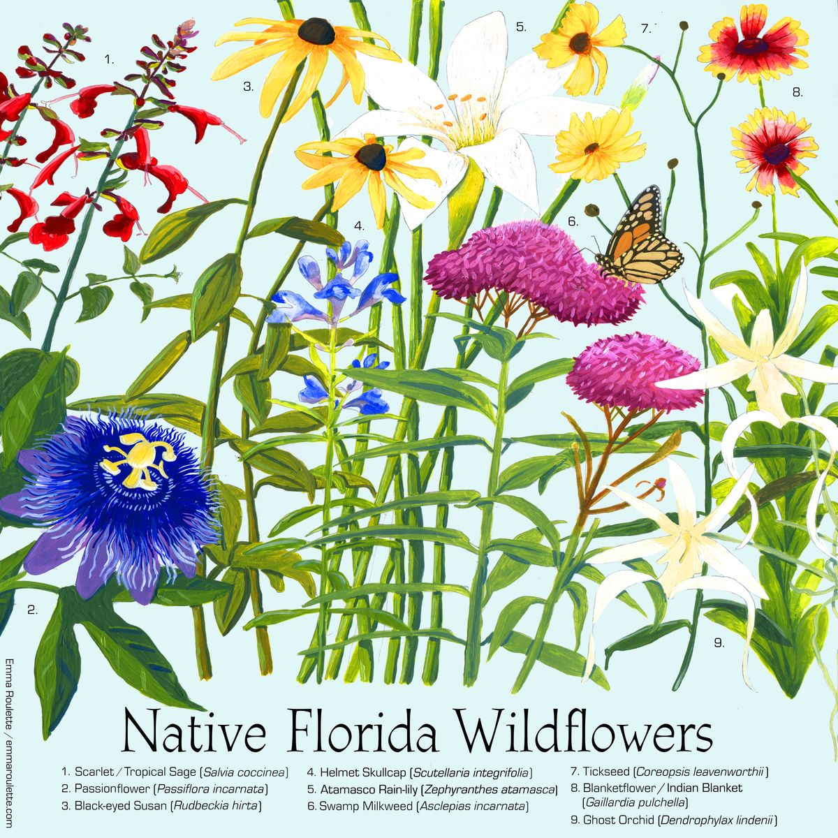 Garance-Emma-Roulette-Native-Florida-wildflowers