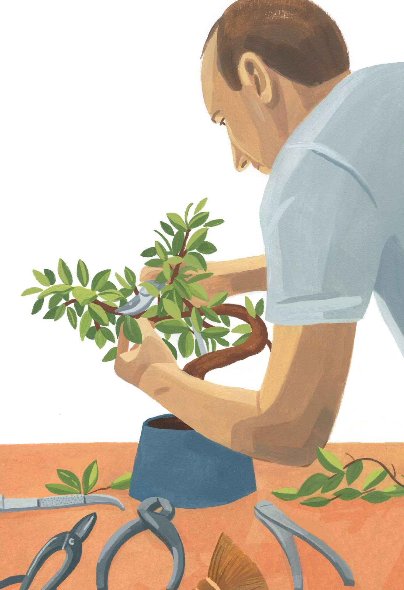 Garance-Illustration-Grace-Helmer-Plantfulness-Bonsai