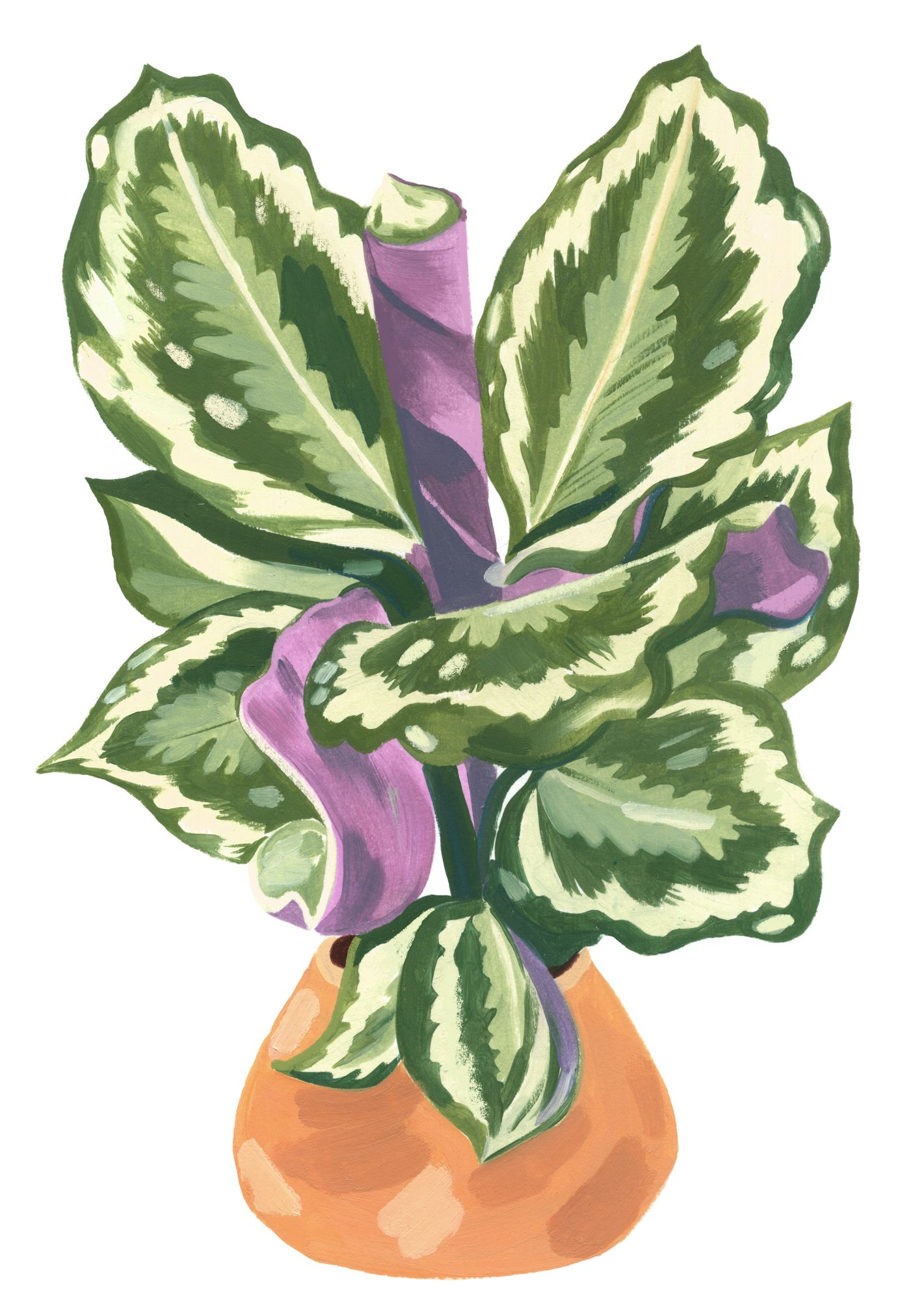Garance-Illustration-Grace-Helmer-Plantfulness-Calathea-Ornata