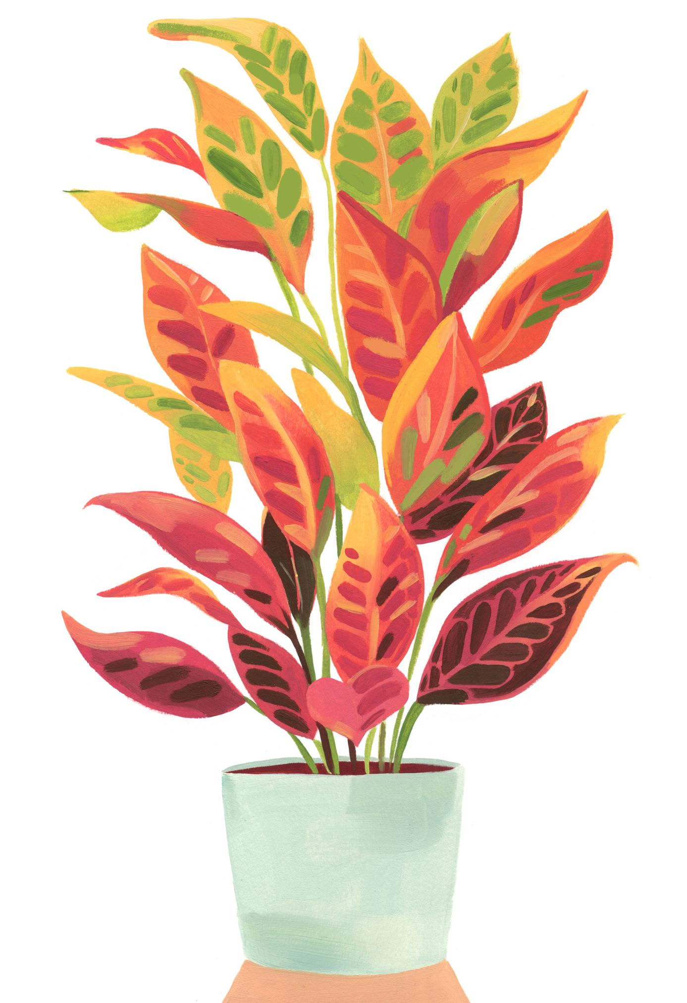 Garance-Illustration-Grace-Helmer-Plantfulness-Croton