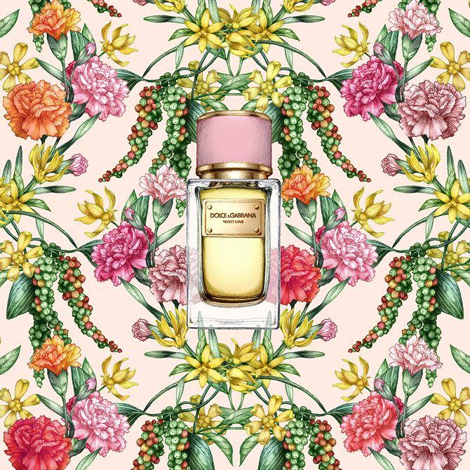 garance-illustration-Frederique-Vernillet-Dolce-Gabbana-Velvet-Love-Peach_web