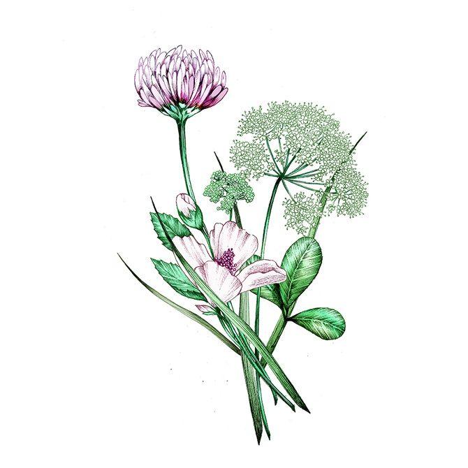 garance-illustration-Frederique-Vernillet-Loccitane-Herbae_web