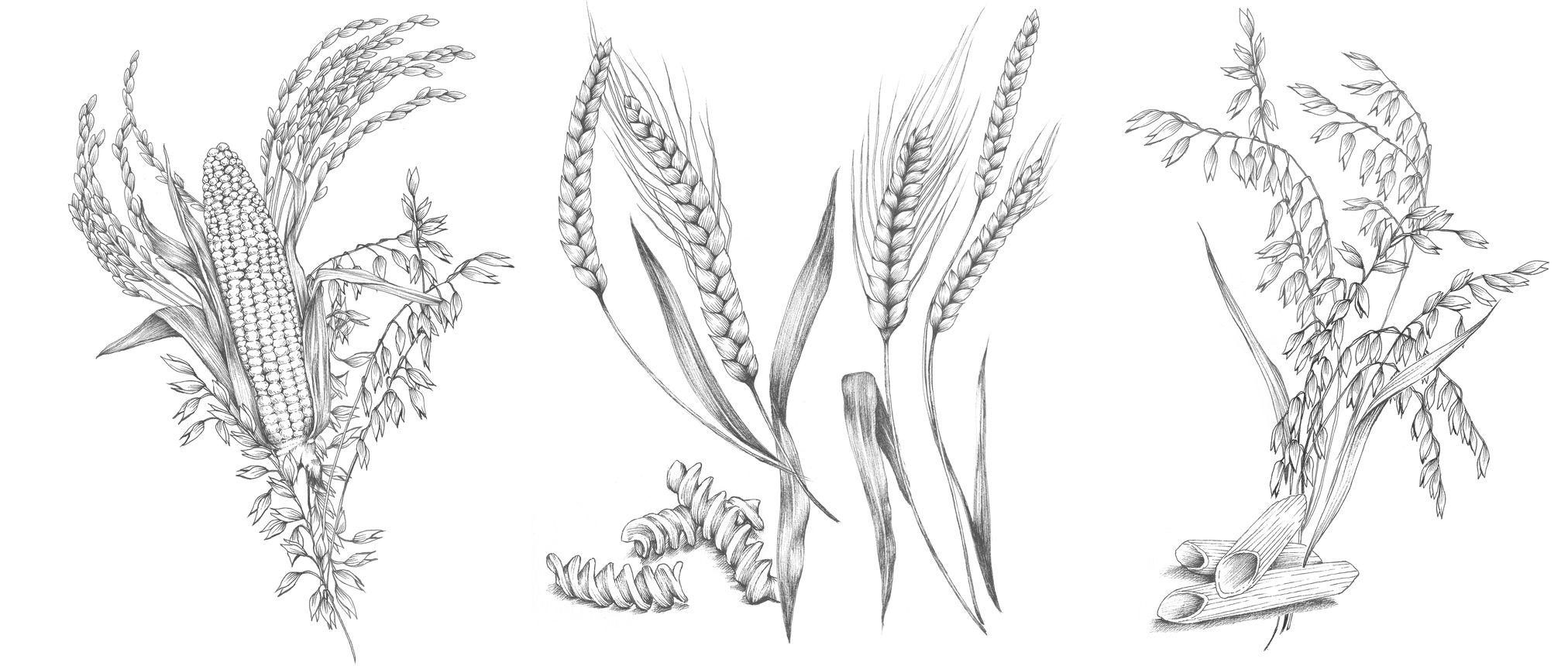garance-illustration-Monop-Pasta_web