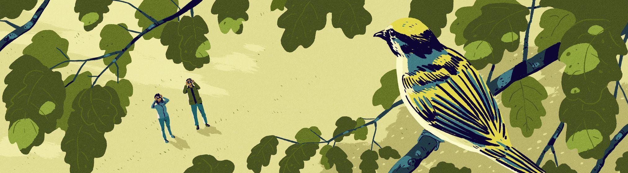 garance-illustration-jack-richardson-The-Boston-Globe-Bird-Watching