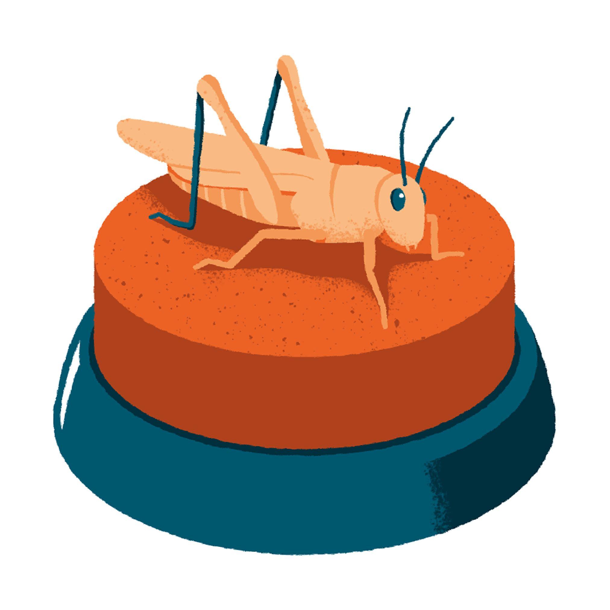 garance-illustration-XXI-Cricket-attack_web
